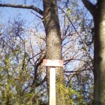 A few trees have signs marking their type along the greenway.